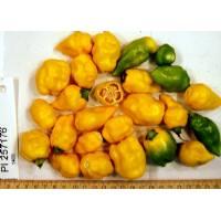 PI-257176 Chilli - 10 X Pepper Seeds