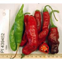 PI-439452 Creams Chilli - 10 X Pepper Seeds