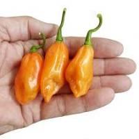 Pickersgill's Orange - 10 X Pepper Seeds