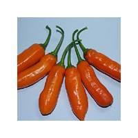 Queen Laury - 10 X Pepper Seeds