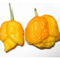 Trinidad Scorpion Moruga Yellow - 10 X Pepper Seeds