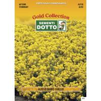 Alisso Yellow - Gold Seeds by Sementi Dotto
