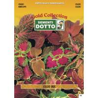 Coleus (Coleus blumei) - Gold Seeds by Sementi Dotto 0.19gr