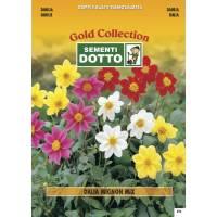 Dahlia Mignon Mix (Dahlia variabilis) - Gold Seeds by Sementi Dotto - 0.9gr