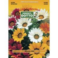 Gazania (Gazania splendens) mix - Gold Seeds by Sementi Dotto 0.08gr