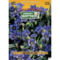 Gentian Blue Lake (Gentiana acaulis) - Gold Seeds by Sementi Dotto - 0.008gr