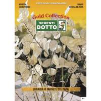 Lunaria Pope's Money - Gold Seeds by Sementi Dotto