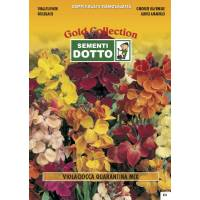 Matthiola Quarantine Stock Mix - Gold Seeds by Sementi Dotto