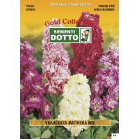 Matthiola Violaciocca Stock Mix - Gold Seeds by Sementi Dotto