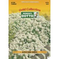 White Dwarf Alyssum (Alyssum maritimum)  - Gold Seeds by Sementi Dotto 0.9gr