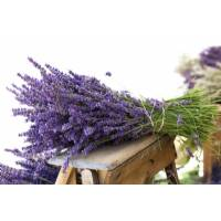 LAVENDER 0,1gr - Bio Aromatic Seeds Seeds by Sementi Dotto