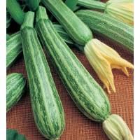 COURGETTE ALBERELLO OF SARZANA - Bio Garden Seeds by Sementi Dotto