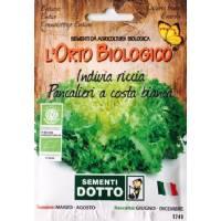 Orto Biologico - Seeds of 'Indivia Riccia Pancalieri'
