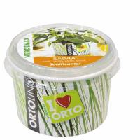 Cultivation Kit ORTOLINO Sage by Verdemax